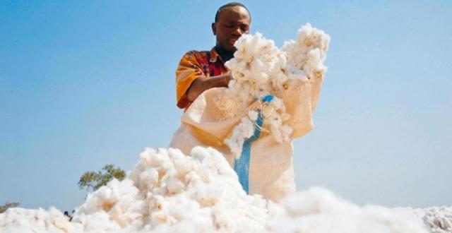 Afrika pamukta çağ atlamaya hazırlanıyor